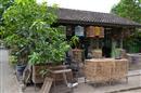 Yogyakarta: Bird market
